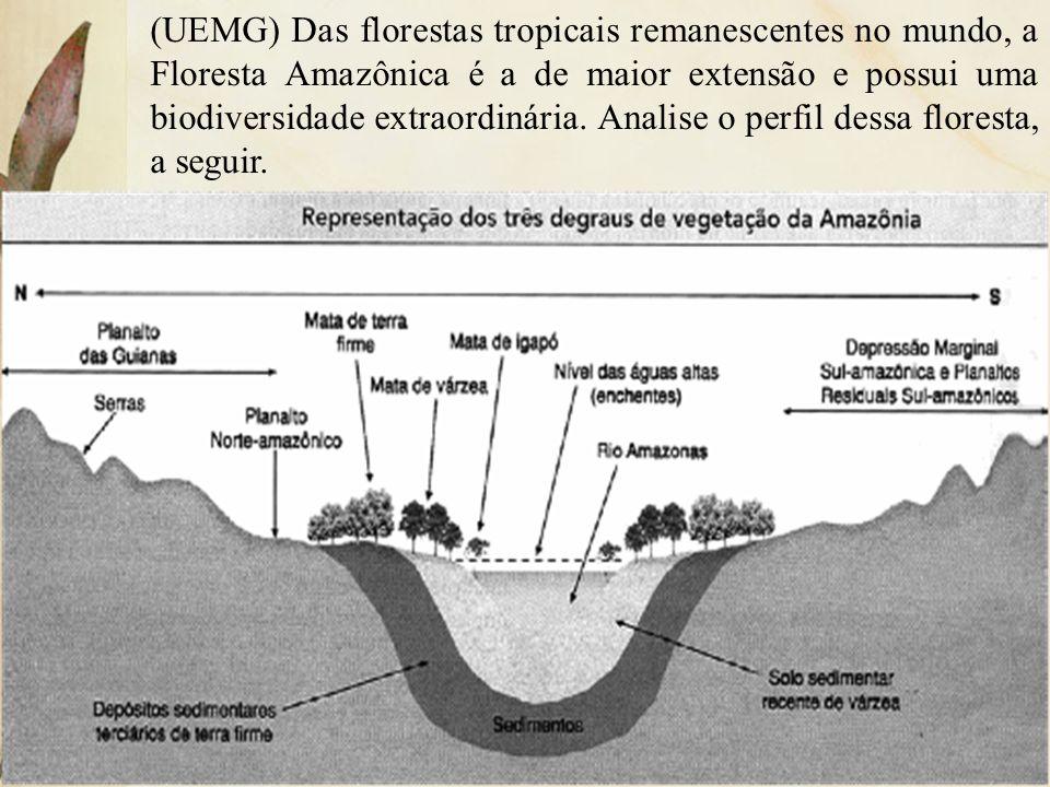 (UEMG) Das florestas tropicais remanescentes no mundo, a Floresta Amazônica é a de maior extensão e possui uma biodiversidade extraordinária. Analise