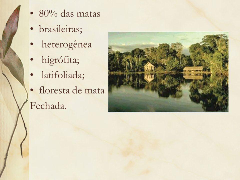 80% das matas brasileiras; heterogênea higrófita; latifoliada; floresta de mata Fechada.