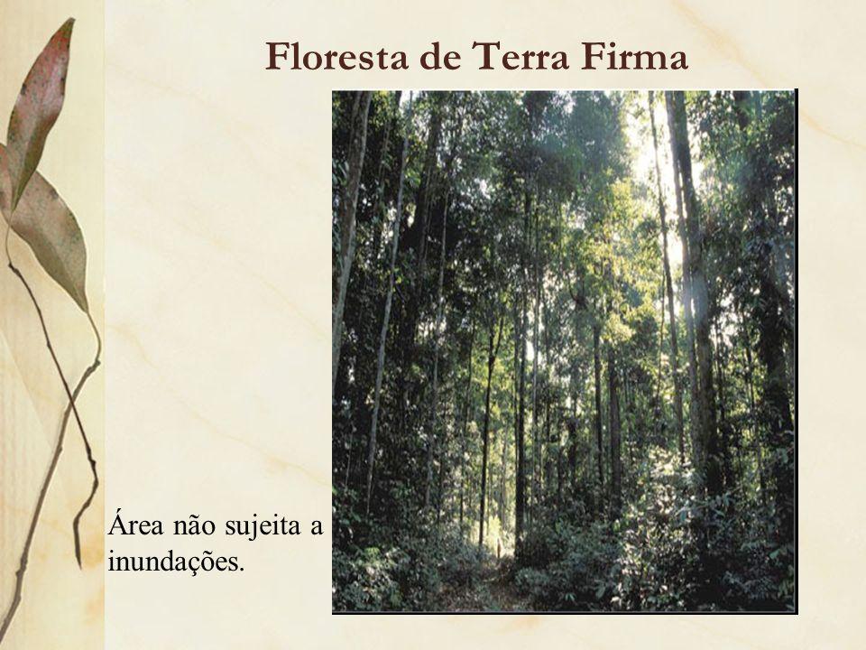 Floresta de Terra Firma Área não sujeita a inundações.