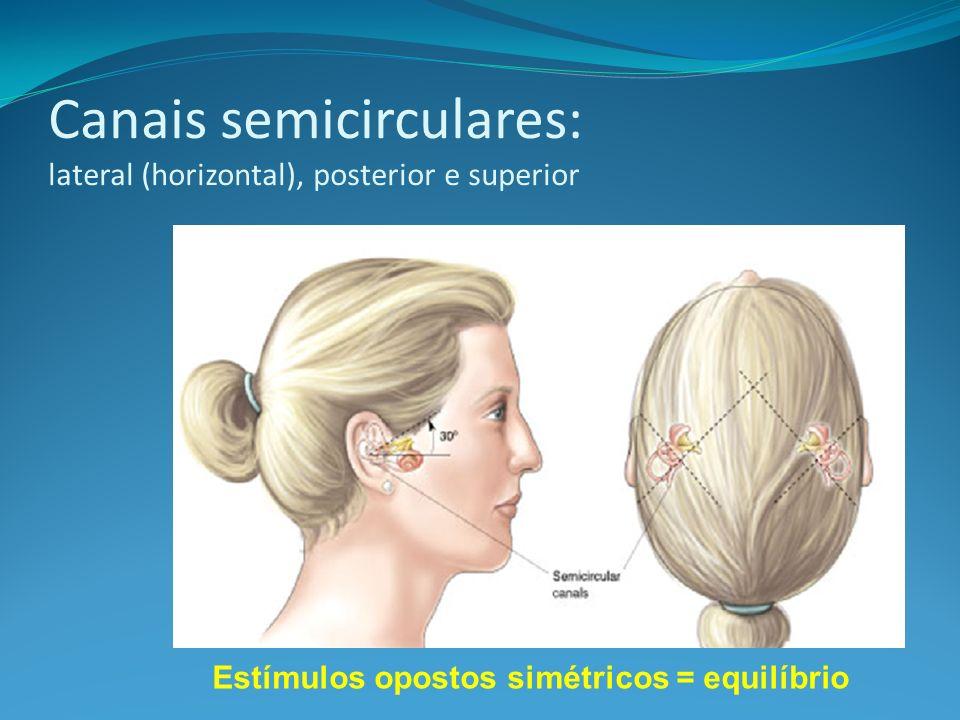 Canais semicirculares: lateral (horizontal), posterior e superior Estímulos opostos simétricos = equilíbrio