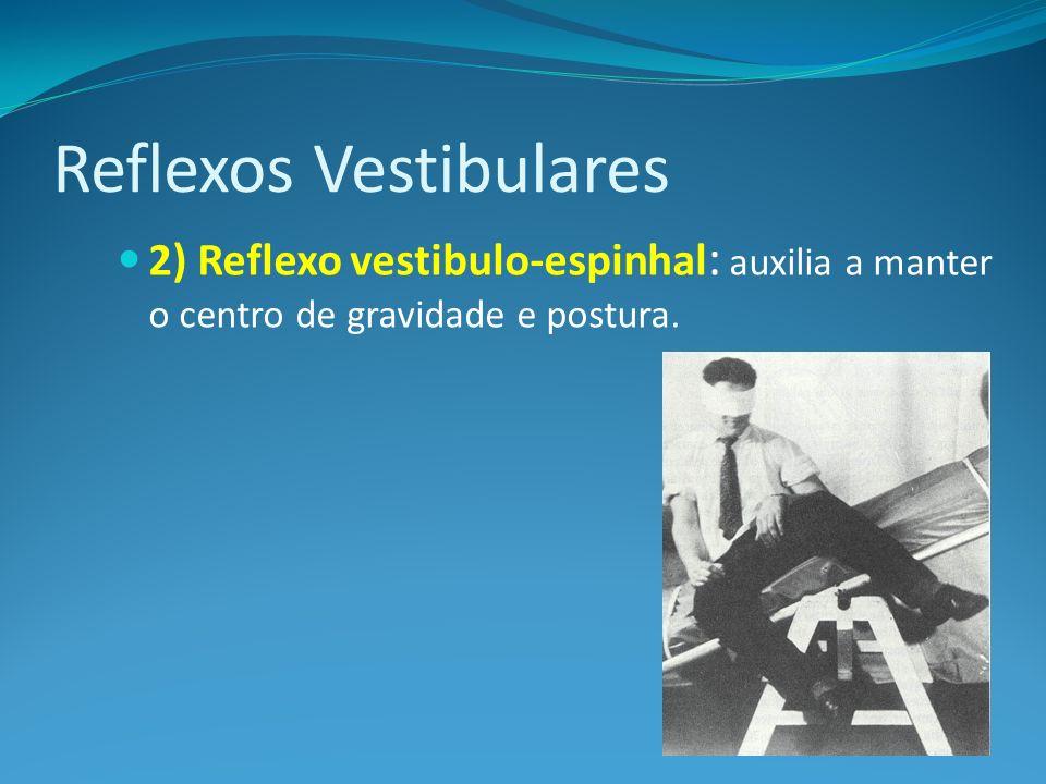 Reflexos Vestibulares 2) Reflexo vestibulo-espinhal : auxilia a manter o centro de gravidade e postura.