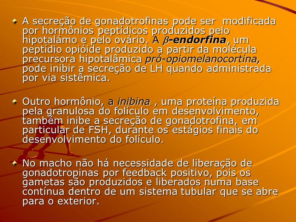 A secreção de gonadotrofinas pode ser modificada por hormônios peptídicos produzidos pelo hipotalámo e pelo ovário. A -endorfina, um peptídio opióide