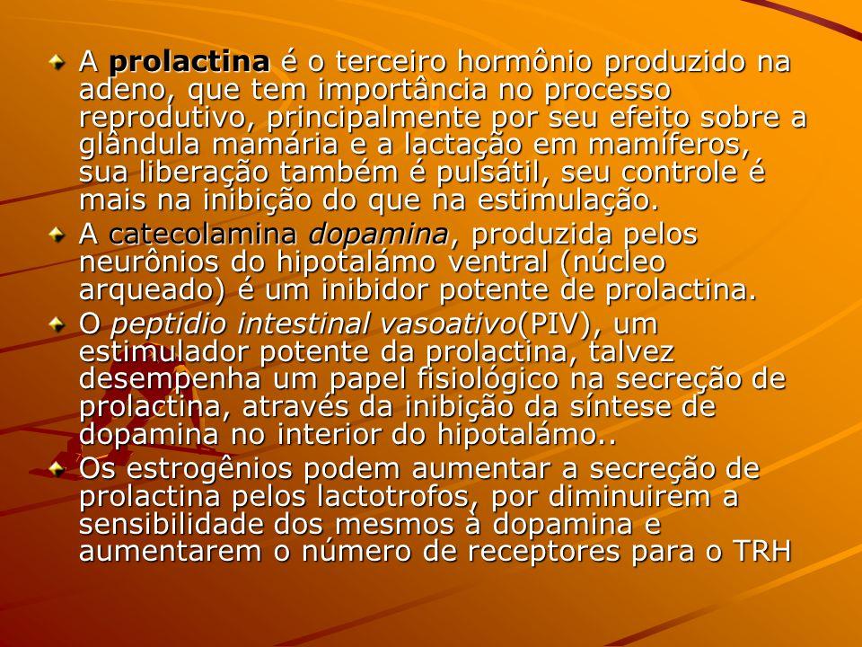 A prolactina é o terceiro hormônio produzido na adeno, que tem importância no processo reprodutivo, principalmente por seu efeito sobre a glândula mam