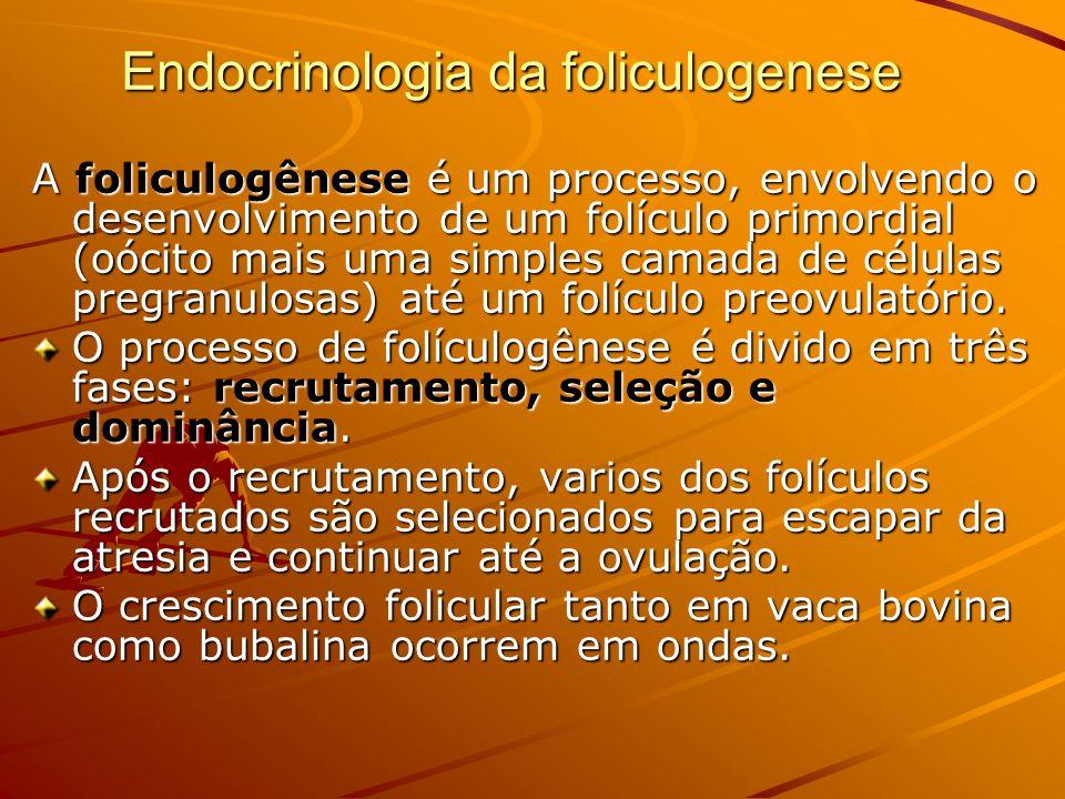 Endocrinologia da foliculogenese A foliculogênese é um processo, envolvendo o desenvolvimento de um folículo primordial (oócito mais uma simples camad