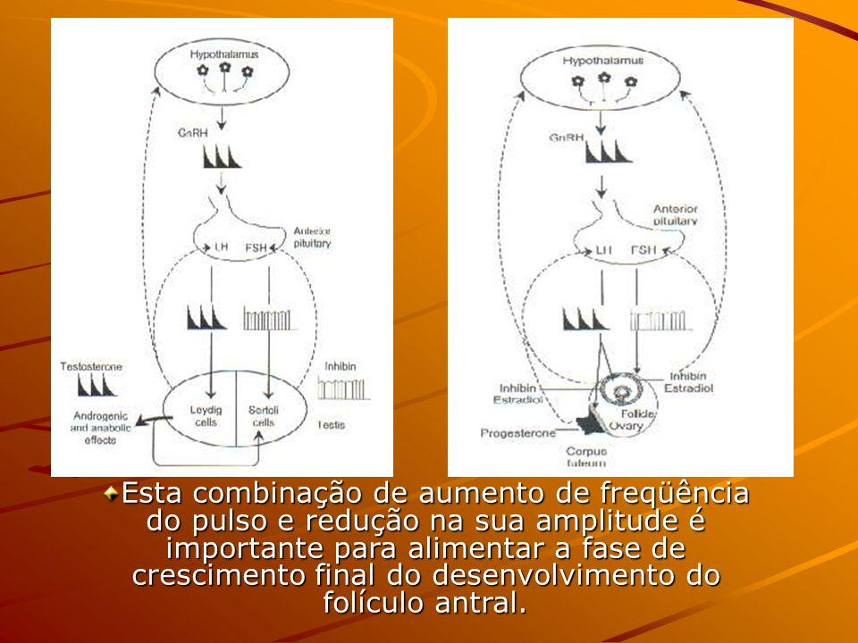 Esta combinação de aumento de freqüência do pulso e redução na sua amplitude é importante para alimentar a fase de crescimento final do desenvolviment