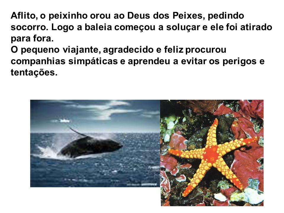 Empolgado, aproximou-se dela mais do que devia e foi engolido juntamente com outras coisas que serviam de alimento ao cetáceo!