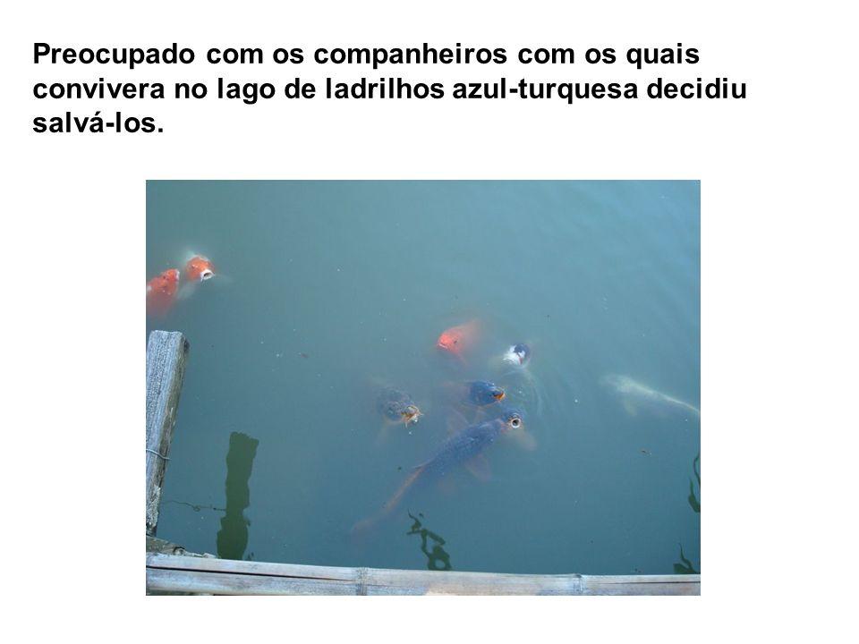 Daquele momento em diante passou a apreciar melhor as belezas da vida e descobriu que havia muitos peixinhos magros e estudiosos como ele, junto dos q