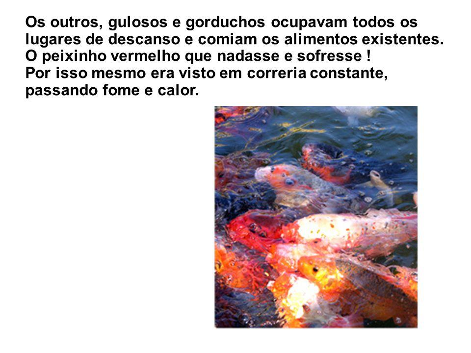 Junto deles havia um peixinho vermelho desprezado por todos. Ele não conseguia pescar a mais leve larva nem refugiar-se nos nichos barrentos.