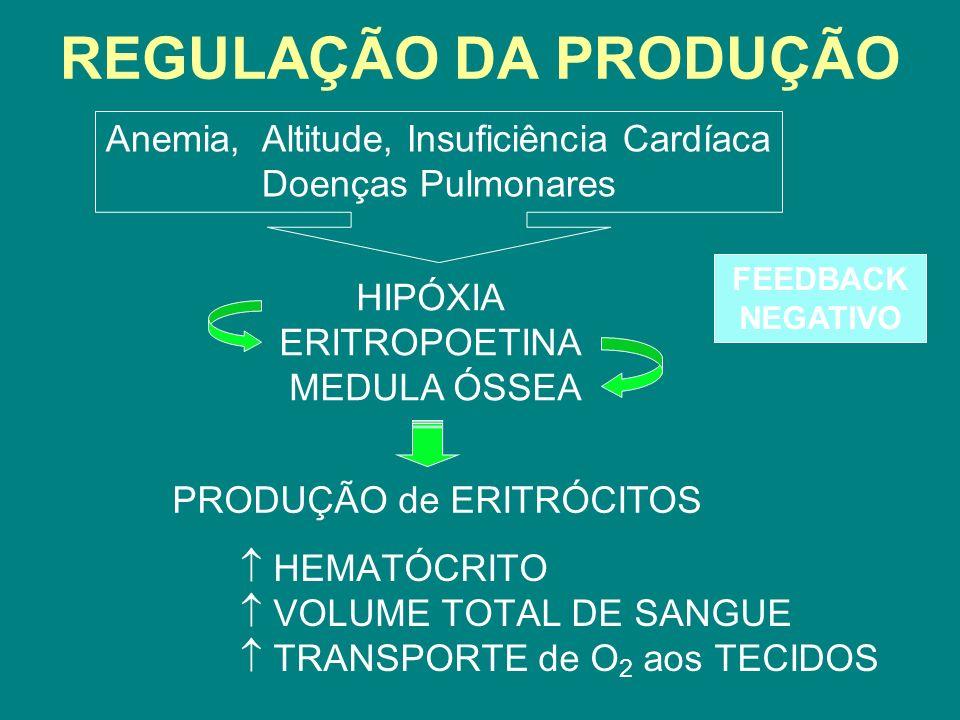 REGULAÇÃO DA PRODUÇÃO FEEDBACK NEGATIVO Anemia, Altitude, Insuficiência Cardíaca Doenças Pulmonares HEMATÓCRITO VOLUME TOTAL DE SANGUE TRANSPORTE de O