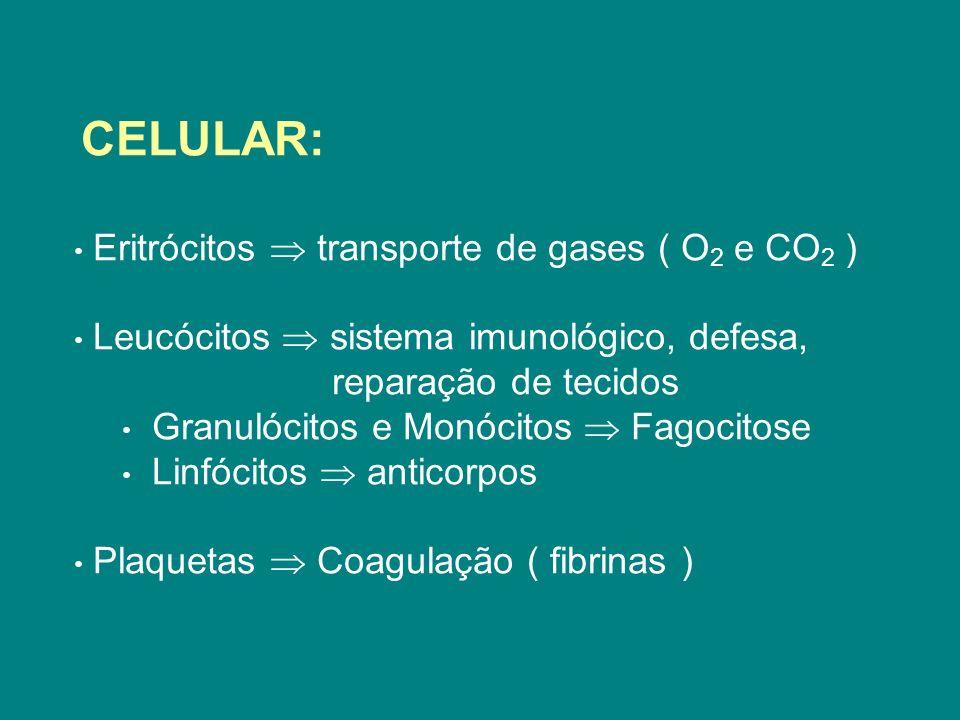CELULAR: Eritrócitos transporte de gases ( O 2 e CO 2 ) Leucócitos sistema imunológico, defesa, reparação de tecidos Granulócitos e Monócitos Fagocito