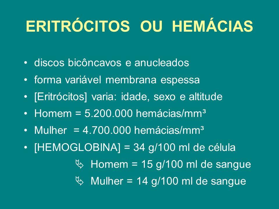 ERITRÓCITOS OU HEMÁCIAS discos bicôncavos e anucleados forma variável membrana espessa [Eritrócitos] varia: idade, sexo e altitude Homem = 5.200.000 h
