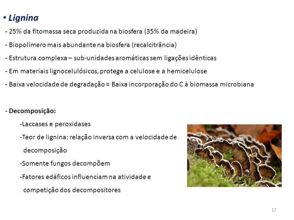 Lignina - 25% da fitomassa seca produzida na biosfera (35% da madeira) - Biopolímero mais abundante na biosfera (recalcitrância) - Estrutura complexa