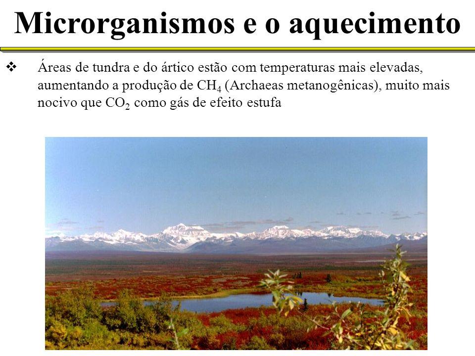 Áreas de tundra e do ártico estão com temperaturas mais elevadas, aumentando a produção de CH 4 (Archaeas metanogênicas), muito mais nocivo que CO 2 c