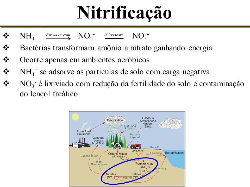 Nitrificação NH 4 + NO 2 - NO 3 - Bactérias transformam amônio a nitrato ganhando energia Ocorre apenas em ambientes aeróbicos NH 4 + se adsorve as pa