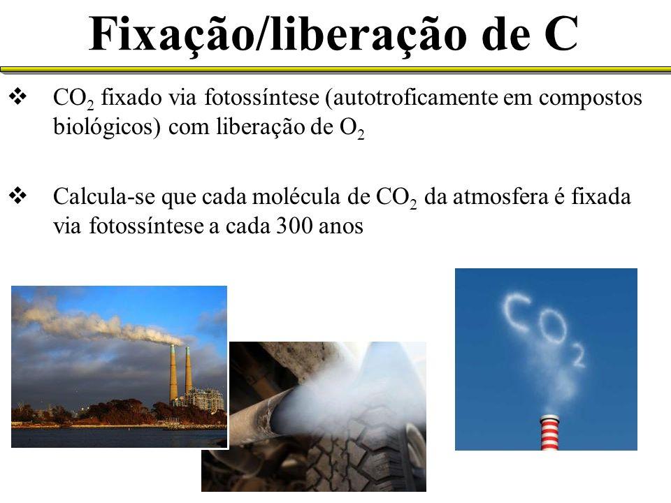 Fixação/liberação de C CO 2 fixado via fotossíntese (autotroficamente em compostos biológicos) com liberação de O 2 Calcula-se que cada molécula de CO