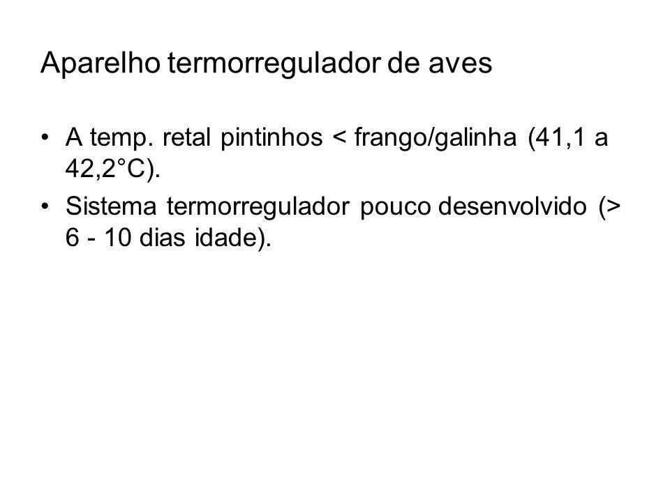 Aparelho termorregulador de aves A temp. retal pintinhos < frango/galinha (41,1 a 42,2°C). Sistema termorregulador pouco desenvolvido (> 6 - 10 dias i