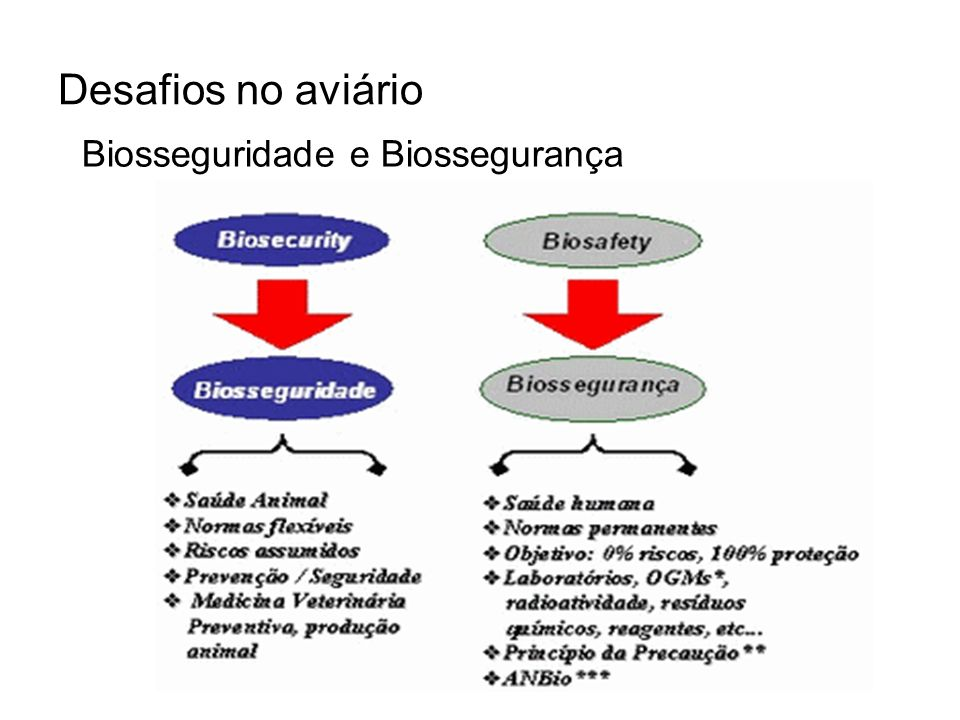 Desafios no aviário Biosseguridade e Biossegurança