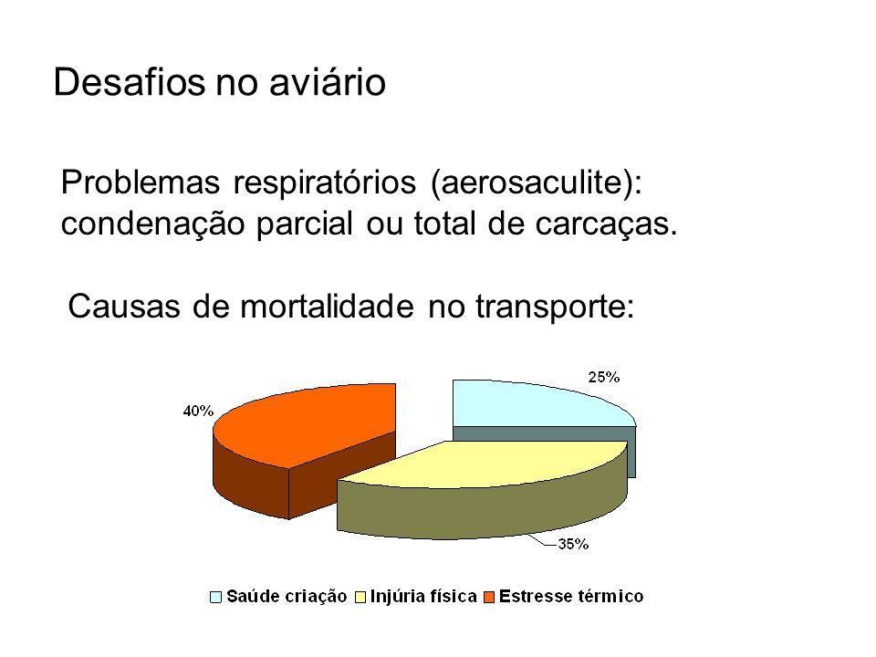 Desafios no aviário Problemas respiratórios (aerosaculite): condenação parcial ou total de carcaças. Causas de mortalidade no transporte: