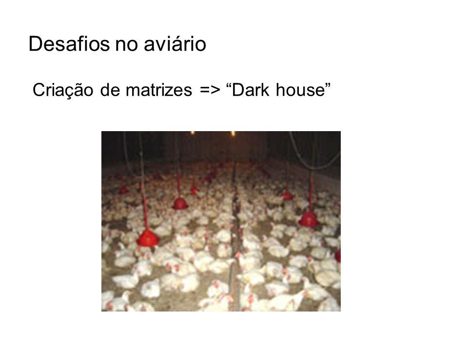 Desafios no aviário Criação de matrizes => Dark house