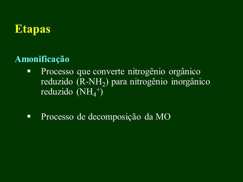 Etapas Amonificação Processo que converte nitrogênio orgânico reduzido (R-NH 2 ) para nitrogênio inorgânico reduzido (NH 4 + ) Processo de decomposiçã