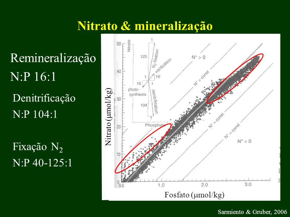 Nitrato & mineralização Remineralização N:P 16:1 Fosfato ( mol/kg) Nitrato ( mol/kg) Sarmiento & Gruber, 2006 Denitrificação N:P 104:1 Fixação N 2 N:P