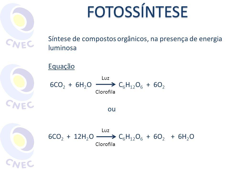 Síntese de compostos orgânicos, na presença de energia luminosa Equação 6CO 2 + 6H 2 O C 6 H 12 O 6 + 6O 2 ou 6CO 2 + 12H 2 O C 6 H 12 O 6 + 6O 2 + 6H