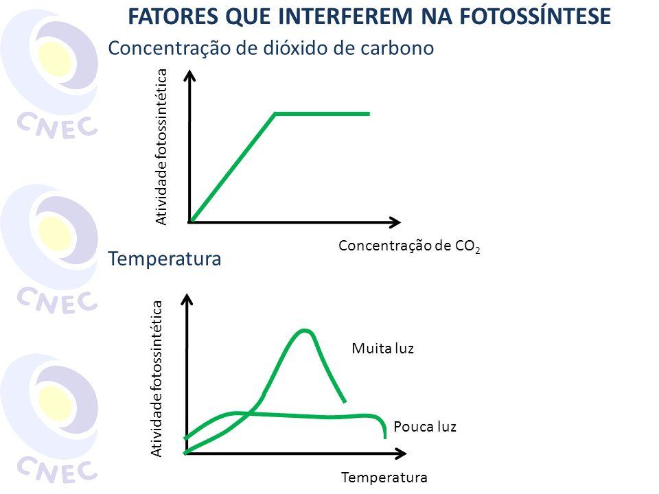 FATORES QUE INTERFEREM NA FOTOSSÍNTESE Concentração de dióxido de carbono Temperatura Concentração de CO 2 Atividade fotossintética TemperaturaAtivida