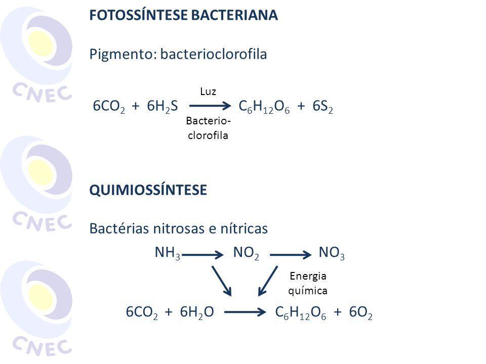 FOTOSSÍNTESE BACTERIANA Pigmento: bacterioclorofila 6CO 2 + 6H 2 S C 6 H 12 O 6 + 6S 2 QUIMIOSSÍNTESE Bactérias nitrosas e nítricas Luz Bacterio- clor
