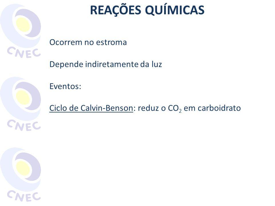 REAÇÕES QUÍMICAS Ocorrem no estroma Depende indiretamente da luz Eventos: Ciclo de Calvin-Benson: reduz o CO 2 em carboidrato