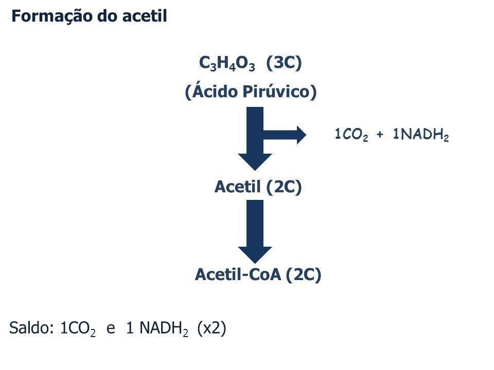 C 3 H 4 O 3 (3C) (Ácido Pirúvico) Acetil (2C) Acetil-CoA (2C) Formação do acetil 1CO 2 + 1NADH 2 Saldo: 1CO 2 e 1 NADH 2 (x2)