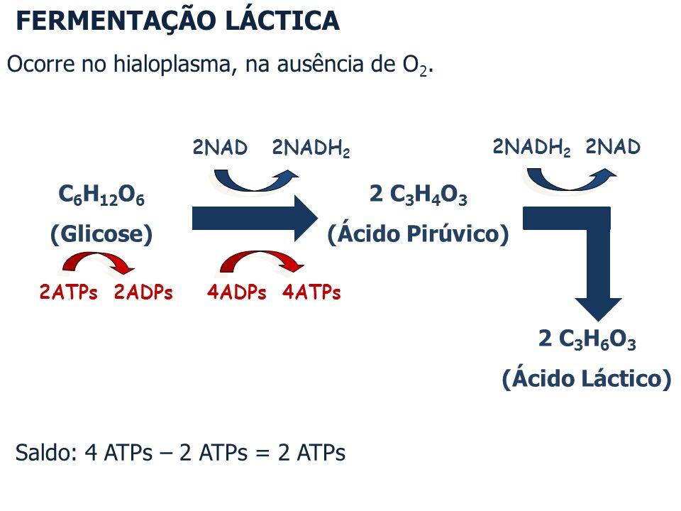 Saldo: 4 ATPs – 2 ATPs = 2 ATPs e 2 CO 2 C 6 H 12 O 6 (Glicose) 2NAD 2NADH 2 4ADPs 4ATPs 2ATPs 2ADPs 2 C 3 H 4 O 3 (Ácido Pirúvico) 2NADH 2 2NAD 2 C 2 H 5 OH (Álcool etílico) FERMENTAÇÃO ALCÓOLICA Ocorre no hialoplasma, na ausência de O 2.