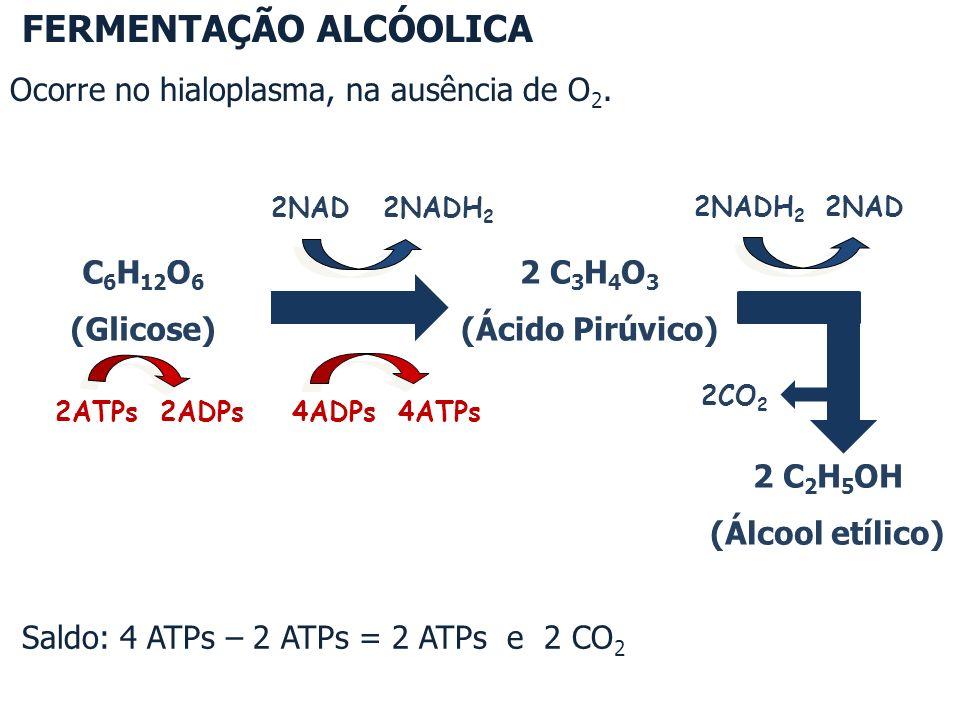 Saldo: 4 ATPs – 2 ATPs = 2 ATPs e 2 CO 2 C 6 H 12 O 6 (Glicose) 2NAD 2NADH 2 4ADPs 4ATPs 2ATPs 2ADPs 2 C 3 H 4 O 3 (Ácido Pirúvico) 2NADH 2 2NAD 2 C 2