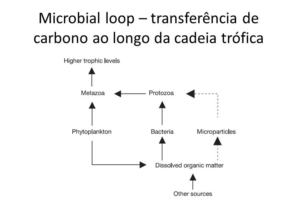 Microbial loop – transferência de carbono ao longo da cadeia trófica