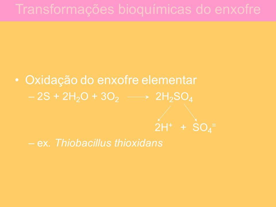 Oxidação do enxofre elementar –2S + 2H 2 O + 3O 2 2H 2 SO 4 2H + + SO 4 = –ex. Thiobacillus thioxidans Transformações bioquímicas do enxofre