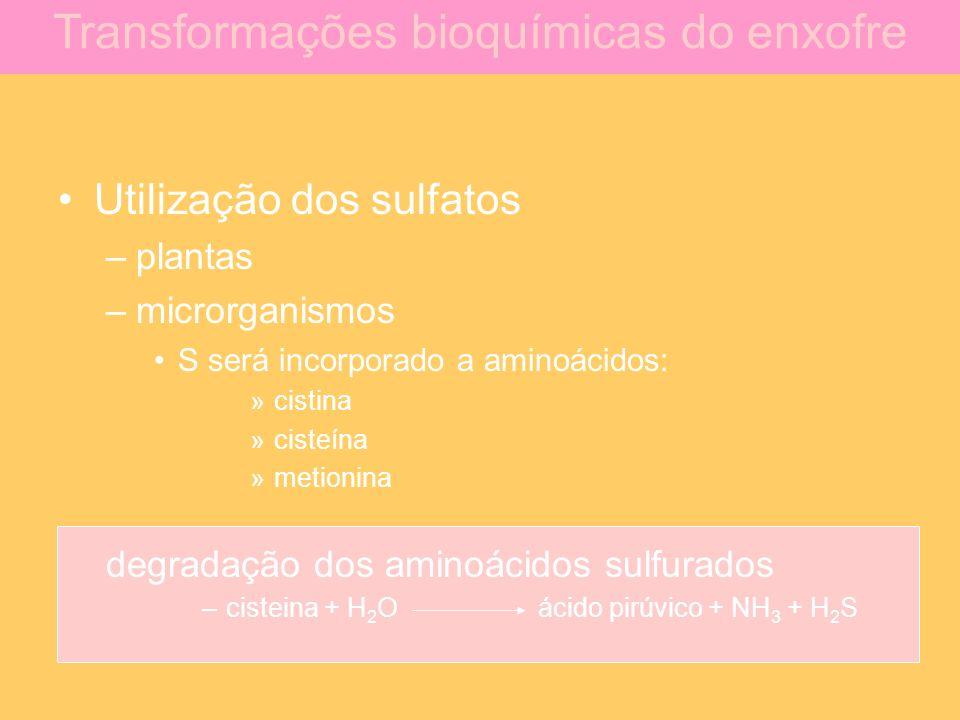 Utilização dos sulfatos –plantas –microrganismos S será incorporado a aminoácidos: »cistina »cisteína »metionina degradação dos aminoácidos sulfurados
