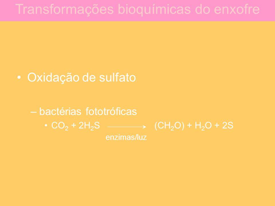 Oxidação de sulfato –bactérias fototróficas CO 2 + 2H 2 S(CH 2 O) + H 2 O + 2S enzimas/luz Transformações bioquímicas do enxofre