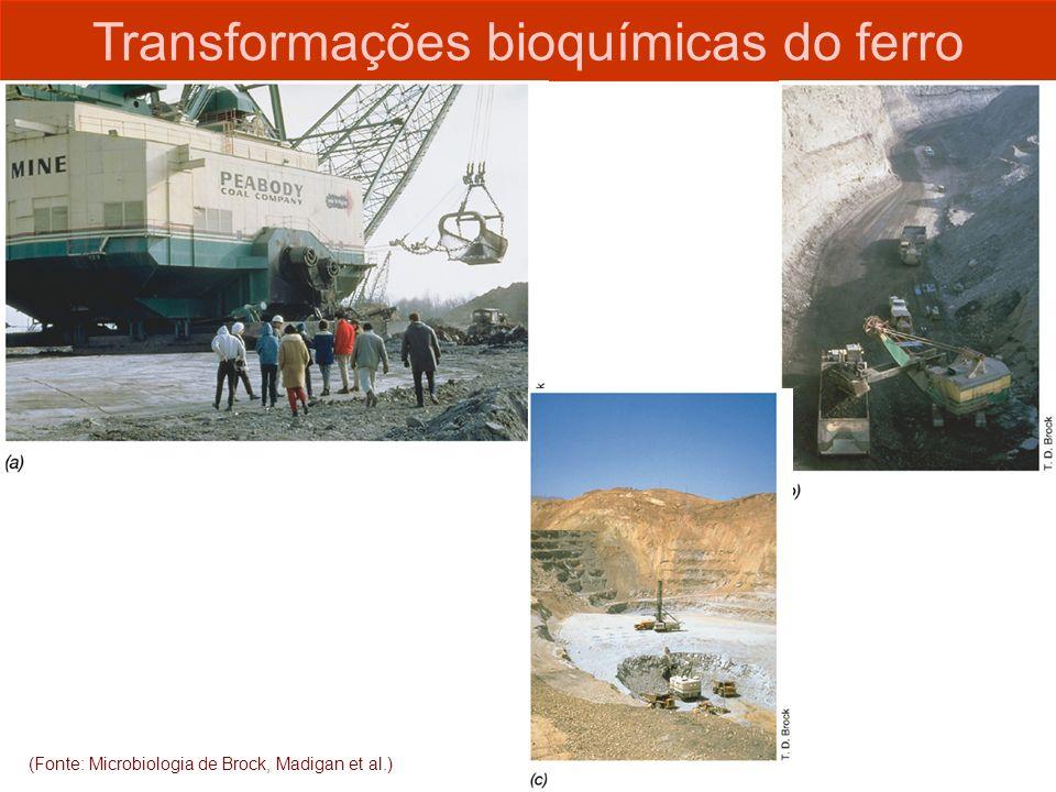 (Fonte: Microbiologia de Brock, Madigan et al.) Transformações bioquímicas do ferro
