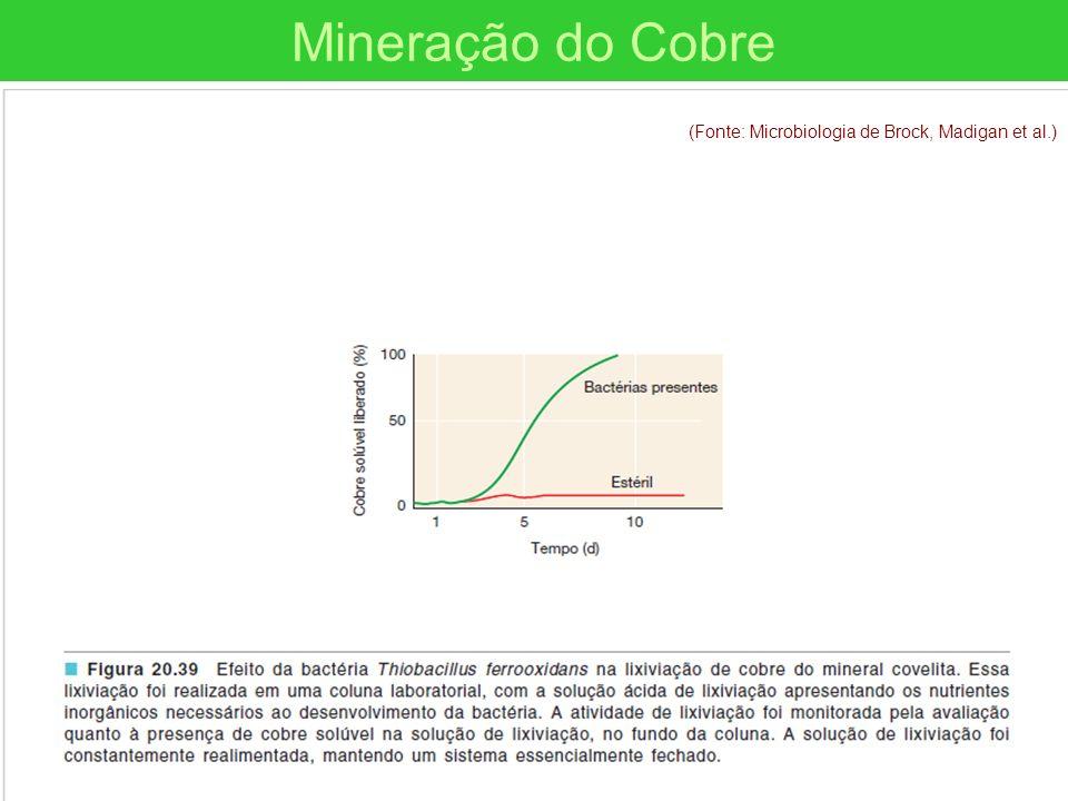 (Fonte: Microbiologia de Brock, Madigan et al.) Mineração do Cobre (Fonte: Microbiologia de Brock, Madigan et al.)
