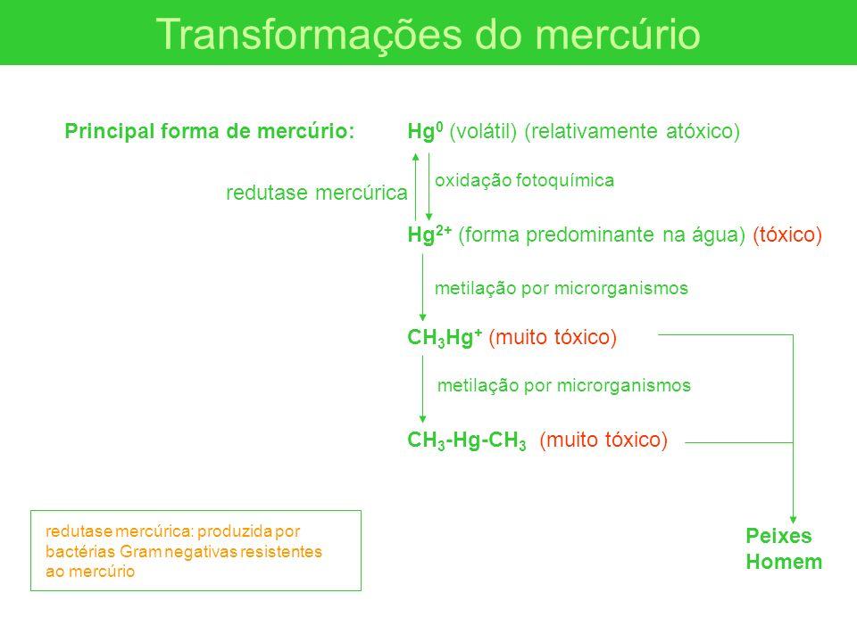 Transformações do mercúrio Principal forma de mercúrio: Hg 0 (volátil) (relativamente atóxico) Hg 2+ (forma predominante na água) (tóxico) CH 3 Hg + (