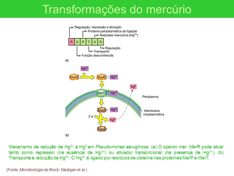 (Fonte: Microbiologia de Brock, Madigan et al.) Transformações do mercúrio Mecanismo de redução de Hg 2+ a Hg 0 em Pseudomonas aeruginosa. (a) O opero