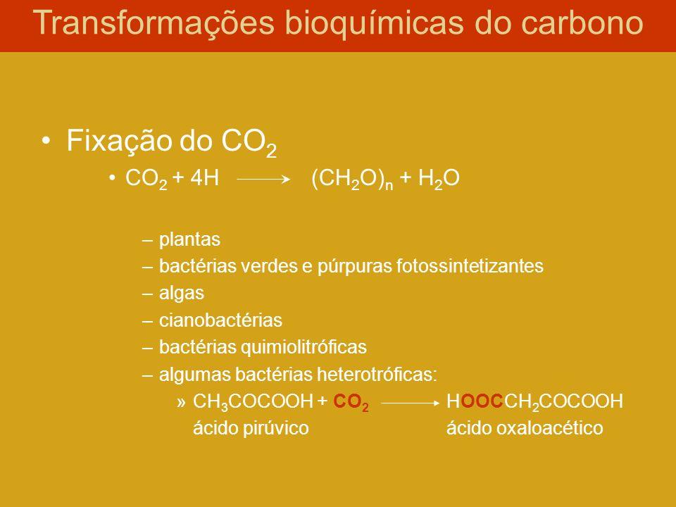 Fixação do CO 2 CO 2 + 4H(CH 2 O) n + H 2 O –plantas –bactérias verdes e púrpuras fotossintetizantes –algas –cianobactérias –bactérias quimiolitrófica