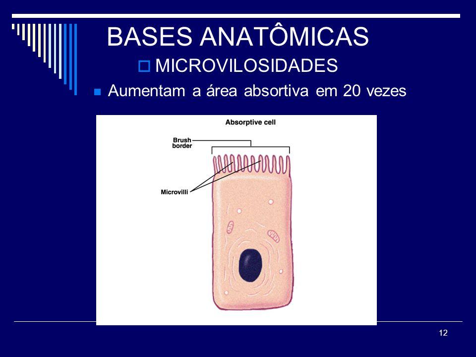 12 BASES ANATÔMICAS MICROVILOSIDADES Aumentam a área absortiva em 20 vezes