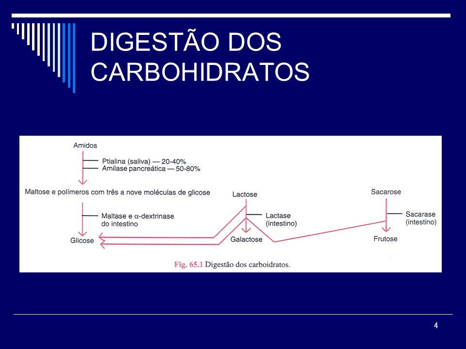 4 DIGESTÃO DOS CARBOHIDRATOS