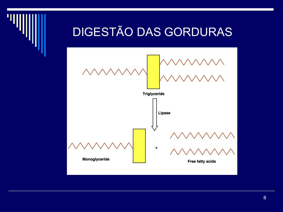 8 DIGESTÃO DAS GORDURAS