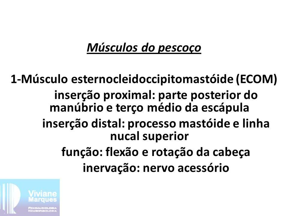 2 - Músculo escaleno anterior Inserção: Face superior da primeira costela inervação: ramos do plexo braquial e cervical 3 - Músculo escaleno médio Inserção: Face superior da primeira costela inervação: ramos do plexo braquial e cervical 4 -Músculo escaleno posterior Inserção: Face superior da segunda costela inervação: ramos do plexo braquial e cervical