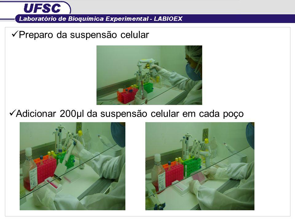 Adicionar 200µl da suspensão celular em cada poço Preparo da suspensão celular