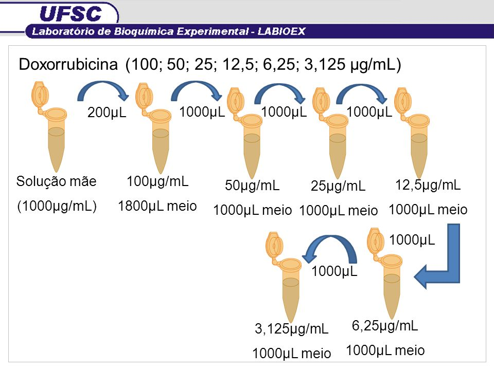 Doxorrubicina (100; 50; 25; 12,5; 6,25; 3,125 µg/mL) Solução mãe (1000µg/mL) 100µg/mL 1800µL meio 200µL 50µg/mL 1000µL meio 25µg/mL 1000µL meio 12,5µg