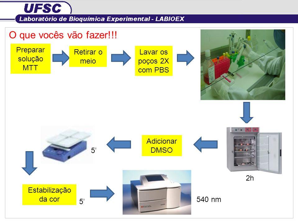 O que vocês vão fazer!!! Preparar solução MTT 2h 5 540 nm Adicionar DMSO Estabilização da cor Lavar os poços 2X com PBS Retirar o meio 5