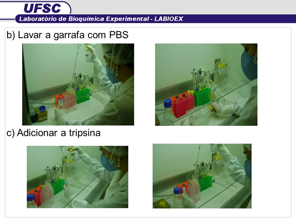 b) Lavar a garrafa com PBS c) Adicionar a tripsina