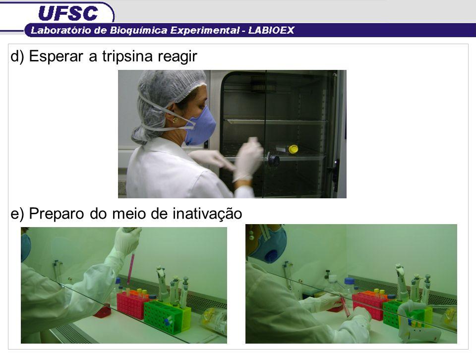 f) Inativar a tripsina g) Divisão do conteúdo da garrafa em dois tubos falcon
